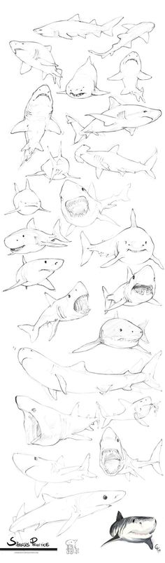 Sharks Practice by Charneco on DeviantArt Like & Repin thx. Follow Noelito Flow instagram http://www.instagram.com/noelitoflow