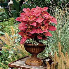Coleus & Ivy | Frame colorful plants with a textured background. These vibrant 'Molten Orange' coleus provide a pop of color among textural grass plantings.
