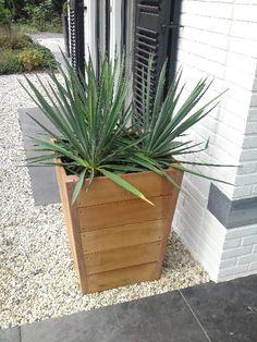 Wood planter White gravel