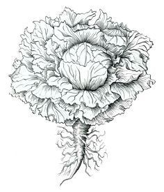 ... the last 2 weeks at the New York Botanical Garden teaching Pen & Ink. Pen & Ink is mostly used in the botanical art and natural science illustration for ...