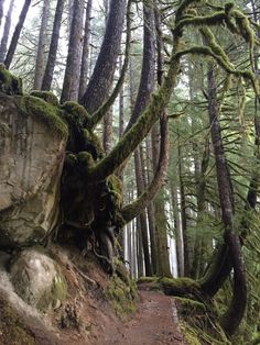 Ancient Grove Trail on Sol Duc Road, Olympic National Park