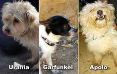 URGENCE EUTHANASIE : SAUVONS VITE CES 3 CHIENS ! - ClicAnimaux