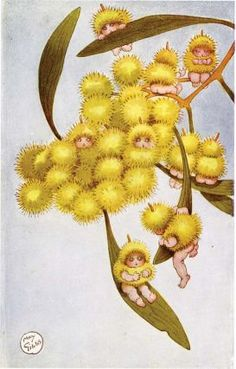 WATTLE BABIES, by May Gibbs