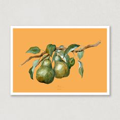 I love how the colours in this watercolour poster really pops. These pears on a branch reminds me so much of summer. Just like the whole collection, you can find this poster with 6 different backgroundcolours! Take a look, and see which one is your favorit 😍🍐 #poster #pears #pearbranch #watercolors #watercolours #backgroundcolours #art Watercolor Postcard, Watercolor Artwork, Watercolor Paper, First Love, My Love, Pears, Colorful Backgrounds, Watercolours, Postcards