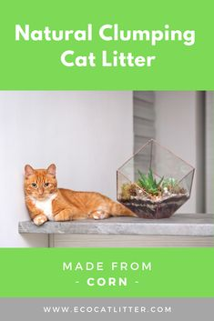 Great Free corn cat litter Ideas There are many ways for litter in addition to have their rewards and also disadvantages. Most of us go through the seve Natural Cat Litter, Best Cat Litter, Automatic Litter Box, Clumping Cat Litter, Three Cats, Grass Seed, Pretty Good, Cool Cats, Biodegradable Products
