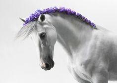 """""""Horse"""" by Svelana Petrova"""