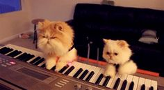 This band.   31 Extremely Talented Animals