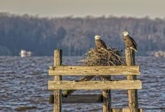 """""""Subletters"""" (location is Jamestown Beach) by Barbara Houston, featured in the Richmond Times-Dispatch on September 10, 2016. Fun Fact: This is a 2016 Virginia Vistas Photo Contest Honorable Mention winner in our Vistas with Wildlife Category. ENJOY!! #VirginiaVistas"""