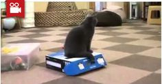 Bully Cat Traps Another Cat In A Box <3  Watch here: http://meowaum.com/1753-bully-cat-traps-another-cat-in-a-box/