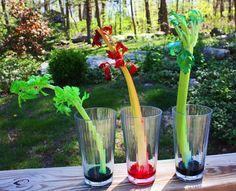 celery-colors
