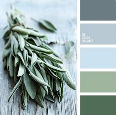 Very light and cold composition turned out in this palette through a combination of cool shades of blue color and spring grass. All shades in this palette belong to one color and its variations are different, so very harmonious palette. It is perfect for Foto Picture, Green Colors, Colours, Green Color Schemes, Interior Colour Schemes, Color Schemes Colour Palettes, Winter Color Palettes, Pastel Colors, Wedding Colour Palettes