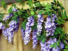tutorial: miniature wisteria