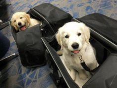 Special Delivery - http://puppypicturesplease.com/special-delivery/  #puppies #dogs #cute