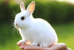 White bunnies are my favorite :)