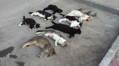 Петиция · CATS CONDEMNED TO DIE OF STARVATION IN PILAR DE LA HORADADA!  The new Mayor, D. Ignacio Ramos García and the Councilor for Health, Dña. María Teresa Valero Curbera, of the current government, have revoked the feeding permits granted since 2011 by the previous government to volunteers of local animal charities, stating that it now PROHIBITS the feeding of stray cats. · Change.org