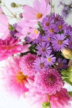 Flores Bonitas Para WhatsApp
