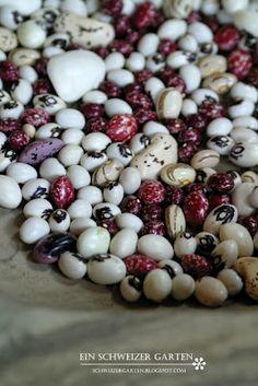 Bunte Bohnensorten Color  Beans