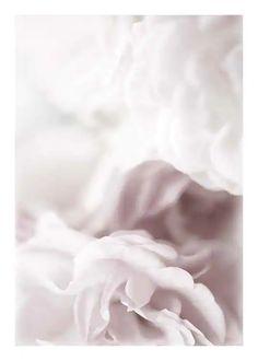 Botanik Poster | Poster mit Blumen und Pflanzen | Desenio.de