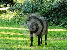 A view of a curious Warthog caught grazing on soft grass. Elephant Images, African Animals, Zebras, Goats, Giraffe, Felt Giraffe, Giraffes, Goat