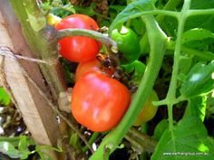 There are quite a few varieties of retail products for adding Potassium to your aquaponics. Generally Potassium hydroxide, Potassium bicarbonate and Potassium carbonate is used to buffer the pH (a...