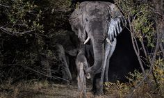 Namibia's wildlife caught by camera trap - in pictures | Environment | The Guardian