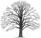 Impression Obsession Cling Mounted Rubber Stamp - Small Bare Tree