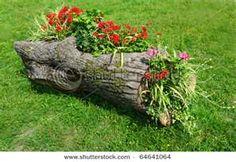 What a creative idea! Large tree stump turned into a beautiful planter!