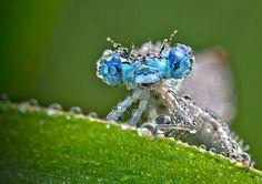 Le foto in macro di Chambon: cristalli di rugiada sugli insetti