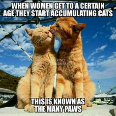 Baby Animals, Funny Animals, Cute Animals, Animals Images, Cute Kittens, Cats And Kittens, Kitty Cats, Cat Couple, Gatos Cats