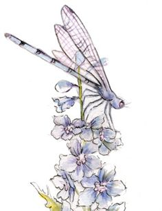 Dragonfly Drawings Tattoo - Bing Images