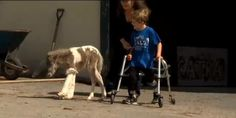 A little boy has become best friends with a foal after discovering that they both share similar disabilities. Judd, a miniature horse born less than two months ago, has a condition that inhibits his ability to walk.