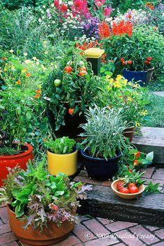 салат-мудрец-перец-помидор