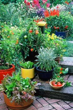 Pepper plants in general are neutral-looking, medium–sized plants that combine well with most dwarf flowering plants such as petunias, marigolds, and zinnias.