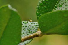 Iti-bity by glfenton, via Flickr