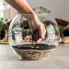 Build Your Own Cactus Terrarium! Great DIY activity to do at home while we are social distancing Cactus Terrarium, Small Terrarium, How To Make Terrariums, Cactus Plants, Making A Terrarium, Growing Succulents, Planting Succulents, Planting Flowers, Plants In Jars