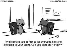 #Cats in the office... | Read Andertoons #comics @ www.gocomics.com/andertoons/2014/07/30?utm_source=pinterest&utm_medium=socialmarketing&utm_campaign=social-pin | #GoComics #webcomic