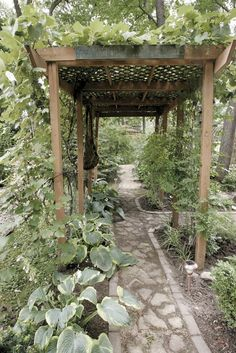 Grape arbor in backyard garden with a covering of vines on the top that dangle over the edge.