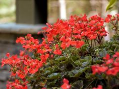 The Easiest Annuals To Plant For Color All Summer Long >> http://www.diynetwork.com/how-to/outdoors/gardening/easy-annual-plants-that-bloom-all-summer-long-pictures?soc=pinterest