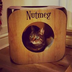 And this adorable kitty is Nutmeg  look! She has her own stocking  #cat #catsofinstagram #cats_of_instagram #catfurnature #catfurniture #catsinboxes #cattoy #INSTACAT_MEOWS #cutecat #PurrMachine #catsinboxes #catbox #Excellent_Cats #BestMeow #dailykittymail #thecatniptimes #catcube #catpod #ArchNemesis #FlyingArchNemesis #myindoorpaws #ififitsisits #cutecatcrew #catchalet #catnip #themeowdaily #kitty #catpyramid #miuandmaosfurriends