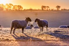 First frost of Winter, Wigginton Herts, UK, Europe