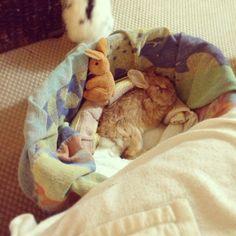 Rambo bunny still recovering from his stroke. Get well little guy! http://www.eddyrambo.com/