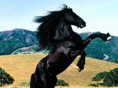 Výsledok vyhľadávania obrázkov pre dopyt kone