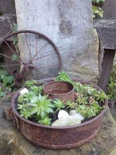 Rusty Garden, Garden Junk, Garden Deco, Garden Pots, Gardening For Beginners, Gardening Tips, Succulents Garden, Planting Flowers, Home Grown Vegetables