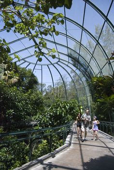 alisonhope:  The Aviary. Probably the most impressive bird cage you will ever see or traverse. San Diego Zoo.