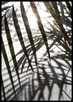 Sunlight Poster i gruppen Posters  hos Desenio AB (8851)