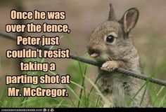 Once he was over the fence...
