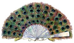 extraordinary paper peacock fan with a mother of pearl handle from The Garphics Fairy