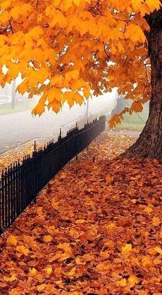 Beautiful Maple Leaf, West Virginia, U.S