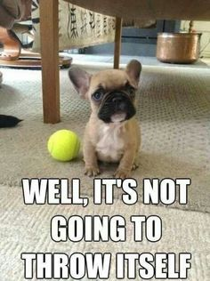 Check out these cute puppies in this compilation of funny puppy videos. Puppies are the cutest. Pug puppies, bulldog puppies, labrador puppies, and more, they Funny Dog Images, Funny Animal Pictures, Funny Dogs, Funny Animals, Cute Animals, Funniest Pictures, Funny Photos, Humorous Pictures, Funny Boxer