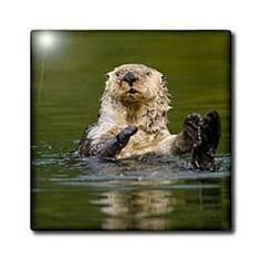 """Alaska, Kodiak Island, Sea Otter wildlife - US02 PSO1053 - Paul Souders - 12 Inch Ceramic Tile by 3dRose. $22.99. Image applied to the top surface. Dimensions: 12"""" H x 12"""" W x 1/4"""" D. High gloss finish. Construction grade. Floor installation not recommended.. Clean with mild detergent. Alaska, Kodiak Island, Sea Otter wildlife - US02 PSO1053 - Paul Souders Tile is great for a backsplash, countertop or as an accent. This commercial quality construction grade tile has a high ..."""